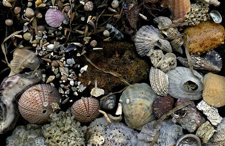 Img.02 (seashells)