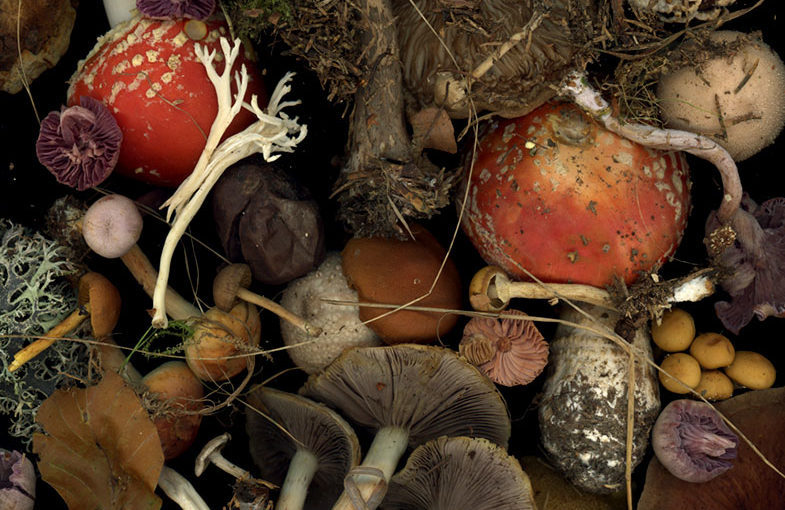 Img.04 (mushrooms)
