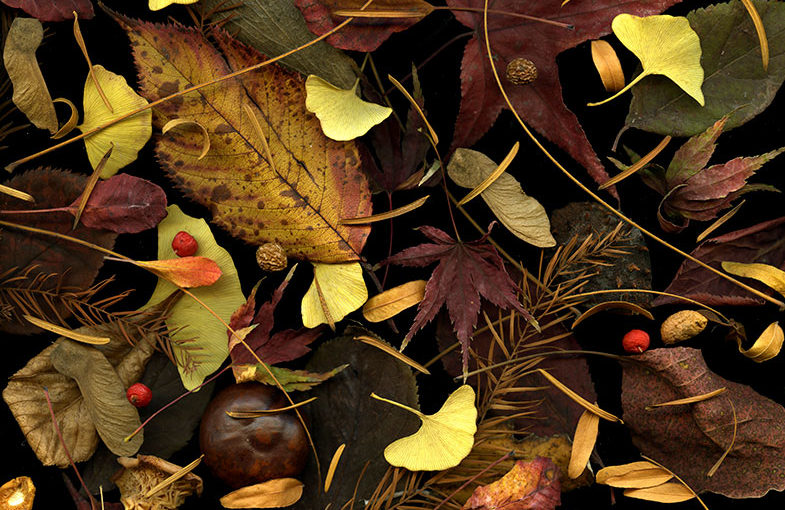 Img.05 (autumn leaves)