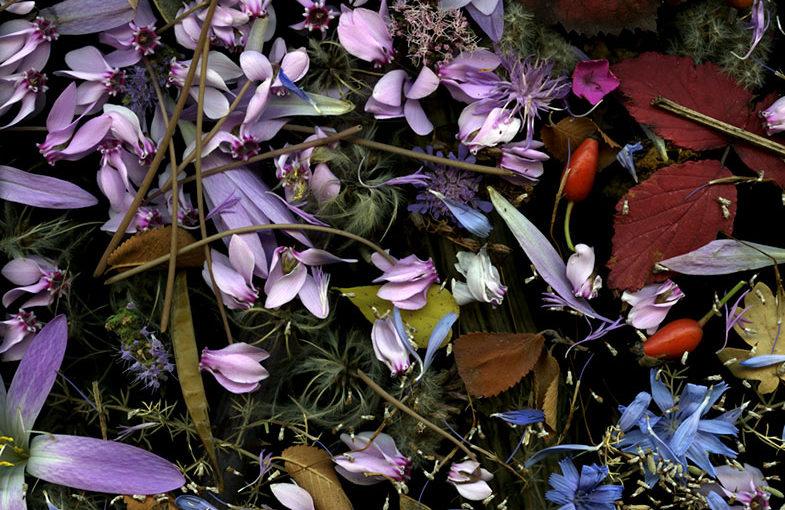Img.01 (fresh flowers)