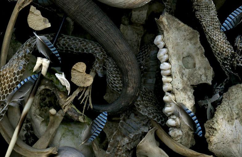 Img.03 (bones)