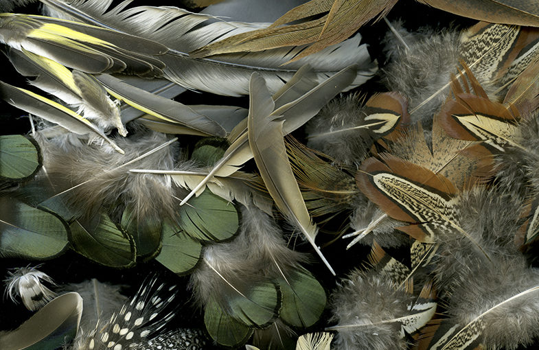 Img.06 (feathers)